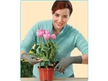 Gardening supplies and indoor gardening helpers for senior for Indoor gardening for seniors