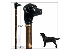 Black Labrador on Long Hazel Stick